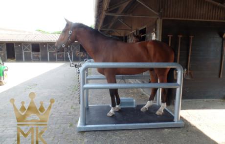 horse onto vibration plate