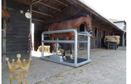 caballo sobre plataforma vibradora