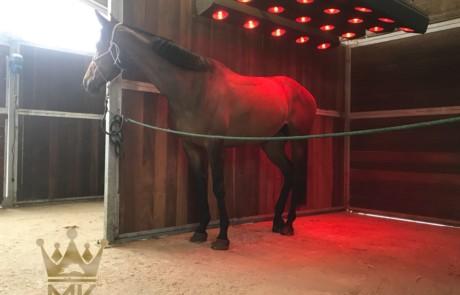 Un cavallo nel Molenkoning Solarium
