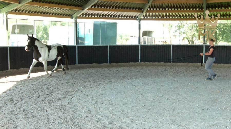Lunging Roof Molenkoning Full Option