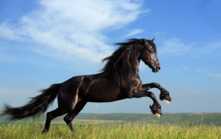 black savage horse