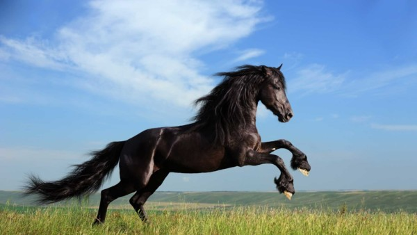 black savage horse